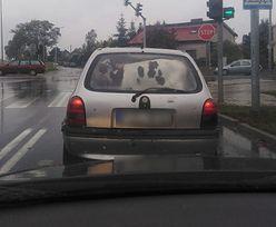 Poznań. Auto z cielakiem na tylnym siedzeniu. Opel pomieścił