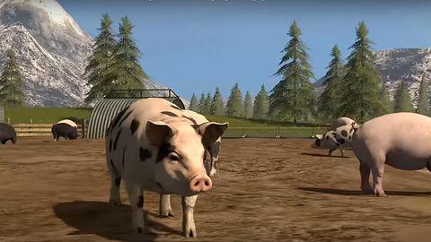 PETA żądna krwi. Domaga się rzezi zwierząt w Farming Simulator 17