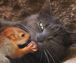 Niezwykła historia. Kotka zaopiekowała się osieroconymi wiewiórkami