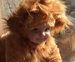 Przebrali dziecko i postawili przed klatką w zoo. Reakcja lwa