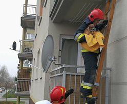 Wyrzucili na balkon szczeniaka, bo obgryzał meble. Przed wychłodzeniem uratowali go strażacy