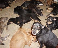 Bahamy. Uratowała dziesiątki psów przed Dorianem