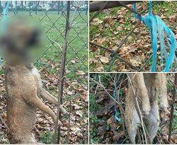 Przypadkiem odkrył szczeniaka powieszonego na płocie szkoły. Jest nagroda za znalezienie sprawcy