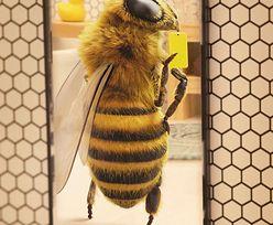 Pszczoła influencerka. Na Instagramie walczy z problemem wymierania pszczelich rodzin