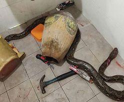 Matka stoczyła walkę na śmierć i życie z gigantycznym wężem