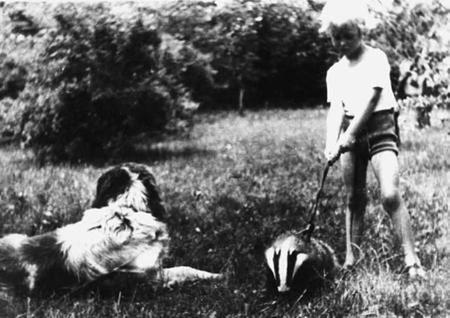 na zdjęciu: borsunio wyprowadza Rysia na spacer