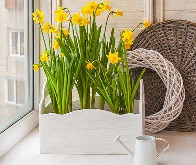 Wiosenne kwiaty – nie tylko w ogrodzie