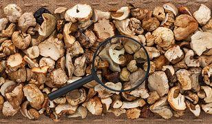 Co warto wiedzieć o suszonych grzybach
