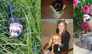 Oto zdjęcia Waszych zwierzaków. Są fantastyczne