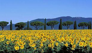 Toskania, zdjęcie autentyczne