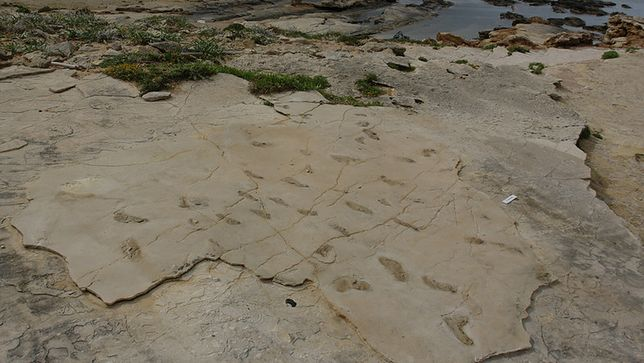 Dr Gerard Gierliński odkrył, że prawdopodobnie pierwsi praludzie wywodzą się z Europy