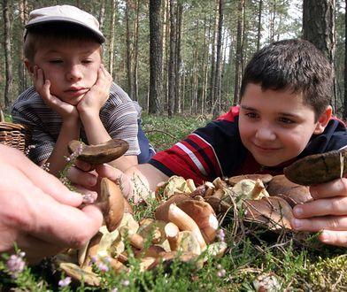 5 najlepszych miejsc na grzyby w Polsce. Stąd z pustym koszykiem nie wrócisz