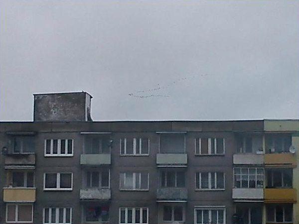 Powracające ptaki?