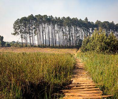 Luwawa Forest - skarb Malawi