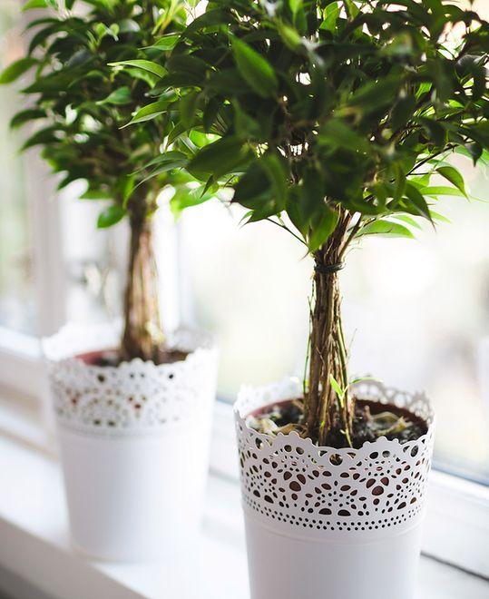 Co się dzieje, gdy wymagania roślin nie są spełniane należycie?
