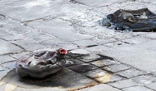 Kataryna: Samobójstwo to nie akt polityczny