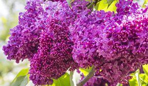 Najłatwiejsze w uprawie rośliny do ogrodu