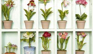 Najpiękniejsze rośliny doniczkowe: storczyki. Uprawa i pielęgnacja