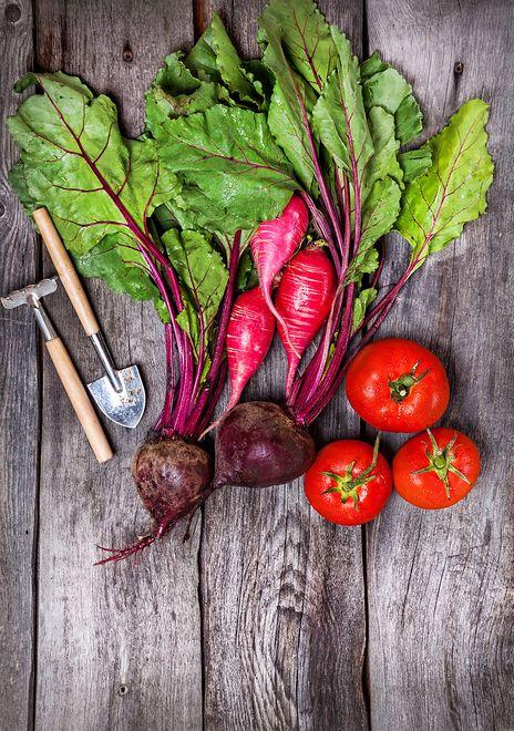 Co z czym, czyli warzywa na grządkach