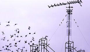 Setki martwych ptaków w parku w Inowrocławiu. Policja otoczyła teren