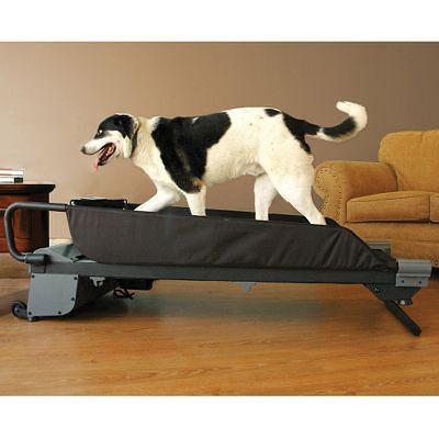 Automatyczna bieżnia dla psów