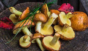 Jak przyrządzać grzyby, by wydobyć z nich pełnię smaku i aromatu