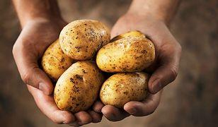 Półtorej tony ziemniaków na dzień św. Tekli