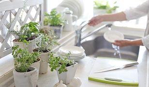 Załóż ogródek na parapecie
