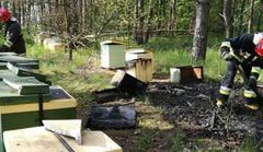 Tysiące pszczół zginęło, bo ktoś podpalił pasiekę