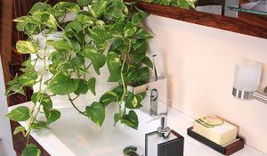Rośliny do ciemnej łazienki