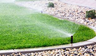 Zakładanie trawnika jesienią. Czy to ma sens?