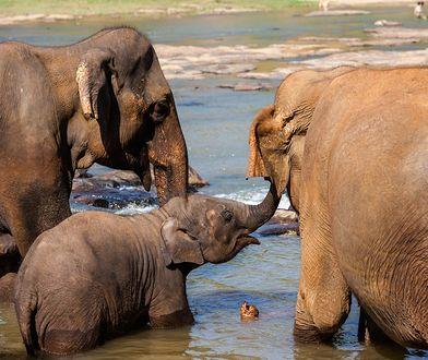 Sri Lanka: spotkanie ze słoniem