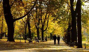 Trwa pogodny i słoneczny październik