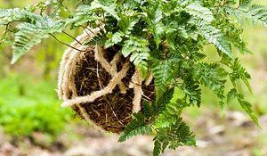 Kokedama - japoński pomysł na rośliny w domu