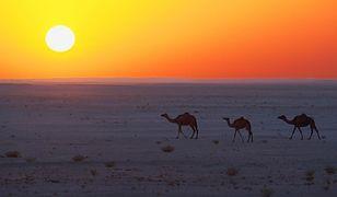 Oman - poznaj alternatywę dla Egiptu