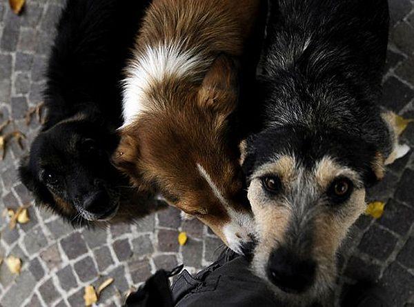 Latem niemal 100 tys. psów ląduje we Włoszech na ulicy