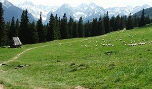 Rusinowa Polana to malownicza łąka górska z pięknym widokiem na Tatry