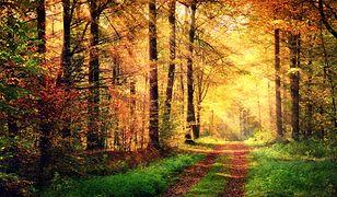 Góry, morze, a może jeziora? Gdzie najlepiej podziwiać złotą polską jesień?