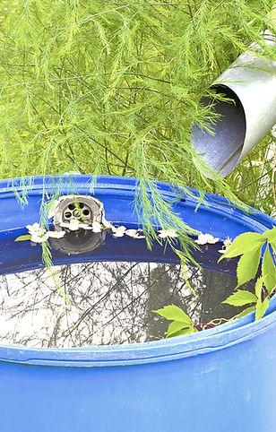 Deszczówka – jak ją gromadzić i wykorzystać?