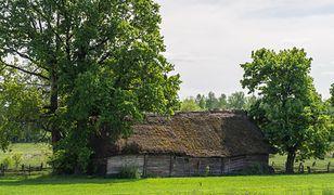 Kierunek przygoda: Przez ostępy Puszczy Knyszyńskiej