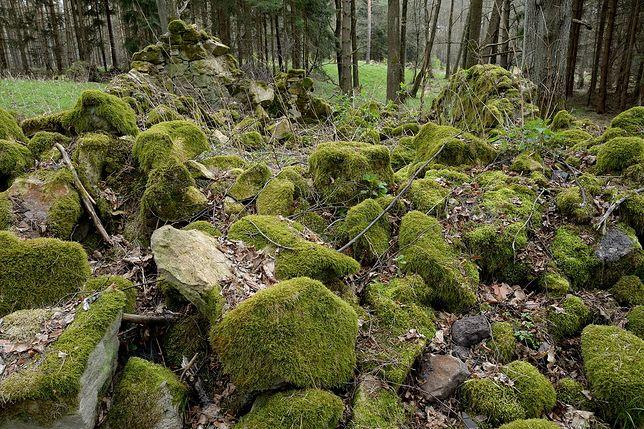 Bory Dolnośląskie - odkryto zaginiony zamek