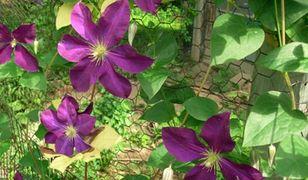Ogrodzenie z siatki: jak sprawić, by stało się ozdobą ogrodu?