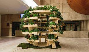 Własny ogród w domu. Nowy pomysł Ikea