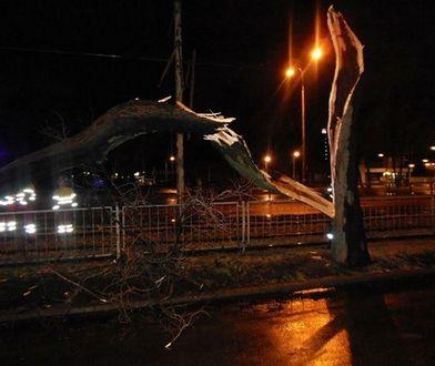 """Powalone drzewa i przerwy w dostawie prądu. Huragan """"Barbara"""" w stolicy"""