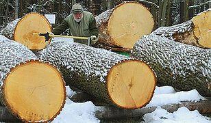 Zakazem prywatyzacji Lasów Państwowych do Konstytucji