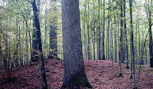 Puszcza Białowieska –  odkryto kilkadziesiąt kurhanów sprzed 1,5 tys. lat