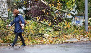 Połamane drzewa spowodowały uszkodzenia