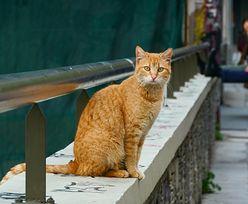 """Koty są samolubne? Naukowcy odpowiadają: """"To mit!"""""""