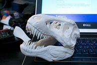 Magia druku trójwymiarowego - Czaszki dinozaurów