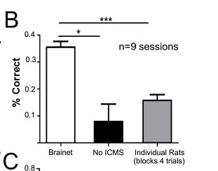 Brainet radzi sobie lepiej, niż pojedyncze szczury (źródło: Duke University)